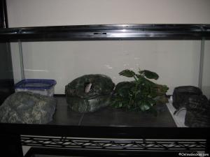 leopard gecko habitat terrarium tiles hides