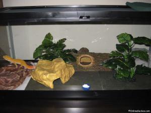 leopard gecko tank habitat giant sunglow