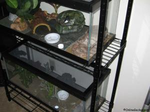 leopard gecko 4-tier wire shelving unit system