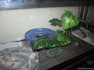 leopard-gecko-terrarium.jpg