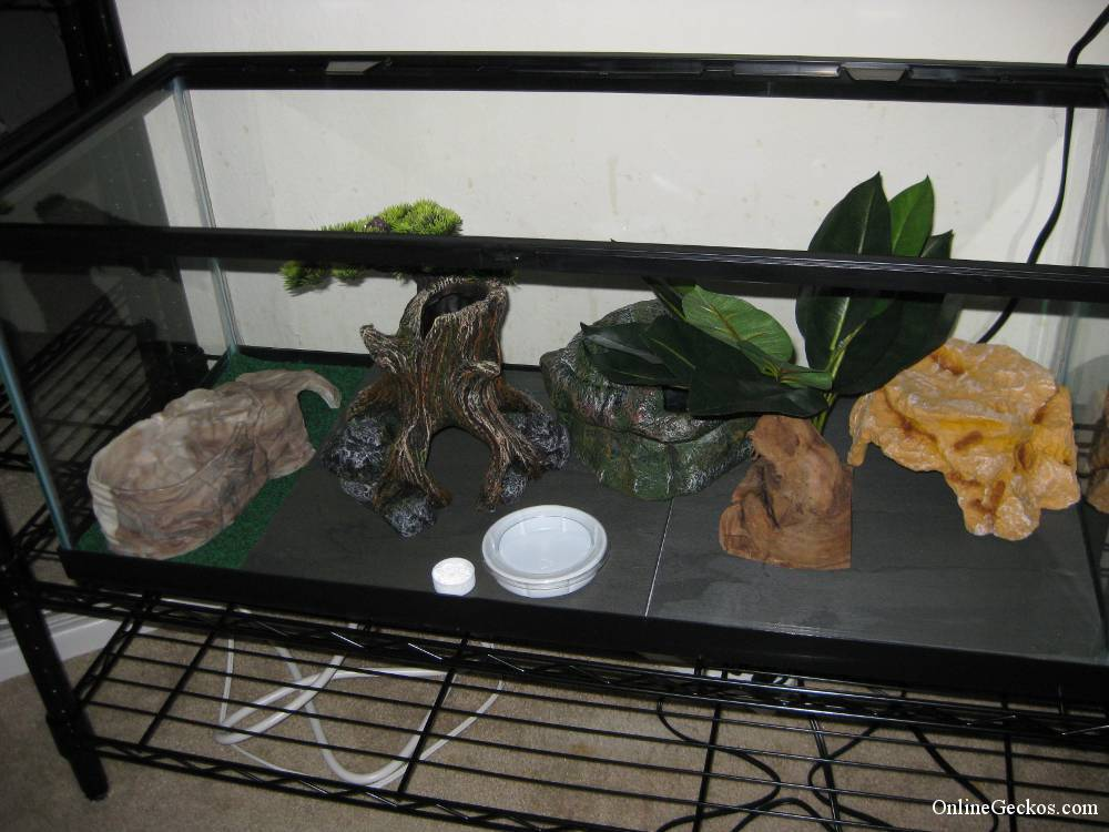 Basic leopard gecko tank setup leopard geckos for sale for Decoration habitat